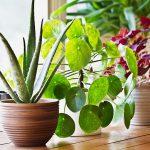 Quali piante migliorano di più la qualità dell'aria indoor?